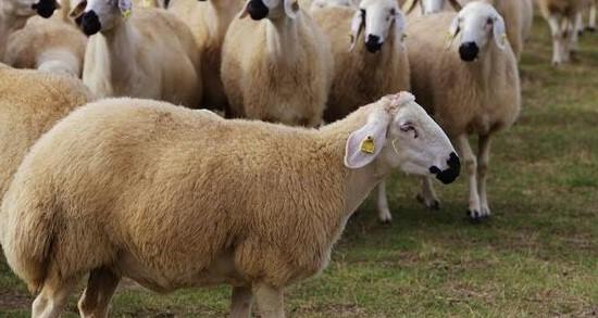 Koyun Kredisi Veren Bankalar 2021 Şartları